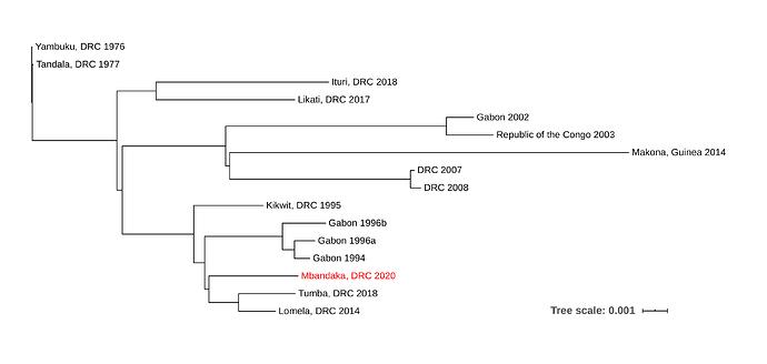 equateur2020-tree