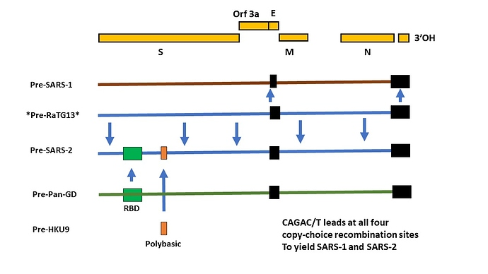 Origin of SARS1 and SARS2 genomes