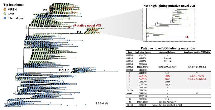 Figure_2.Phylogenetic-tree